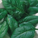 Salad Fresh Spinach Seeds