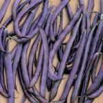 Bean, Purple King