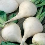 Albino Beet Seeds