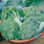 Broccoli, Di Ciccio Organic