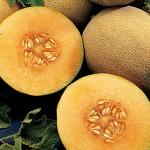Cantaloupe Burpee's Ambrosia Hybrid
