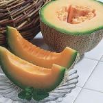 Cantaloupe Burpee's Hybrid