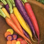Carrot Kaleidoscope Blend Organic