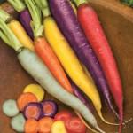 Carrot Kaleidoscope Mix