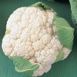 Cauliflower Early White Hybrid