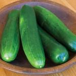 Cucumber Burpless Beauty