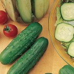 Cucumber Double Feature Hybrid