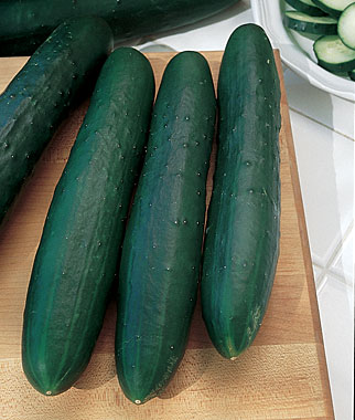 Cucumber Marketmore 76 Garden Seeds And Plants