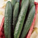 Cucumber Sweeter Yet Hybrid