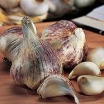 Garlic Early Italian