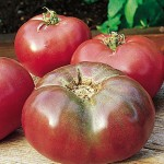 Grafted Tomato Cherokee Purple
