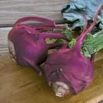 Kohlrabi Purple Vienna Organic