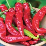 Pepper Hot Cheyenne Hybrid