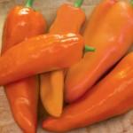 Pepper Sweet Good as Gold Hybrid