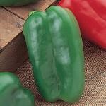 Pepper Sweet Great Stuff Hybrid