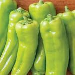 Pepper Sweet Long Tall Sally Hybrid