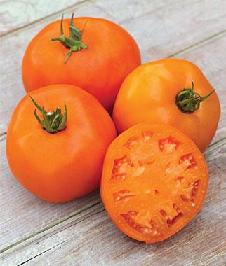 Super Beefsteak Tomato