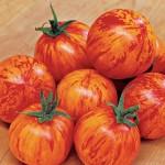 Tomato Red Lightning Hybrid