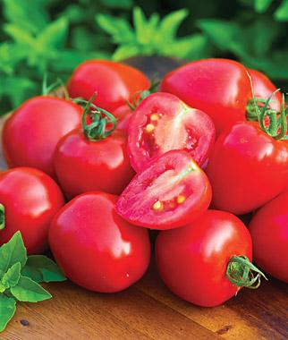Bush Big Boy Tomato