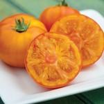 Tomato Tye-Dye Hybrid