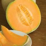 Cantaloupe Hales Best Jumbo