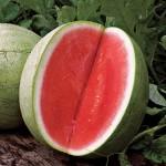 Watermelon Seedless Big Tasty Hybrid
