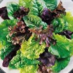 Mesclun Sweet Salad Mix