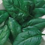 Spinach Salad Fresh