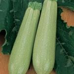 Squash Summer Sweet Gourmet Zucchini Hybrid