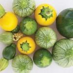 Squash Zucchini Ball Hybrid Mix