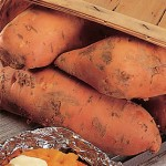 Sweet Potato Bush Porto Rico