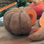 Pumpkin Musquee de Provence