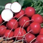 Radish German Giant Organic