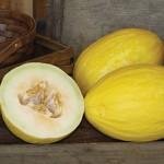 Melon Canary Spanish Sun Hybrid