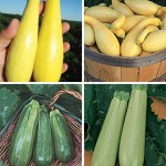 Squash Collection Best of Summer Squash