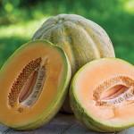 Cantaloupe El Gordo hybrid