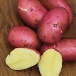 Potato Red Luna