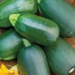 Squash Summer Green Eggs Hybrid